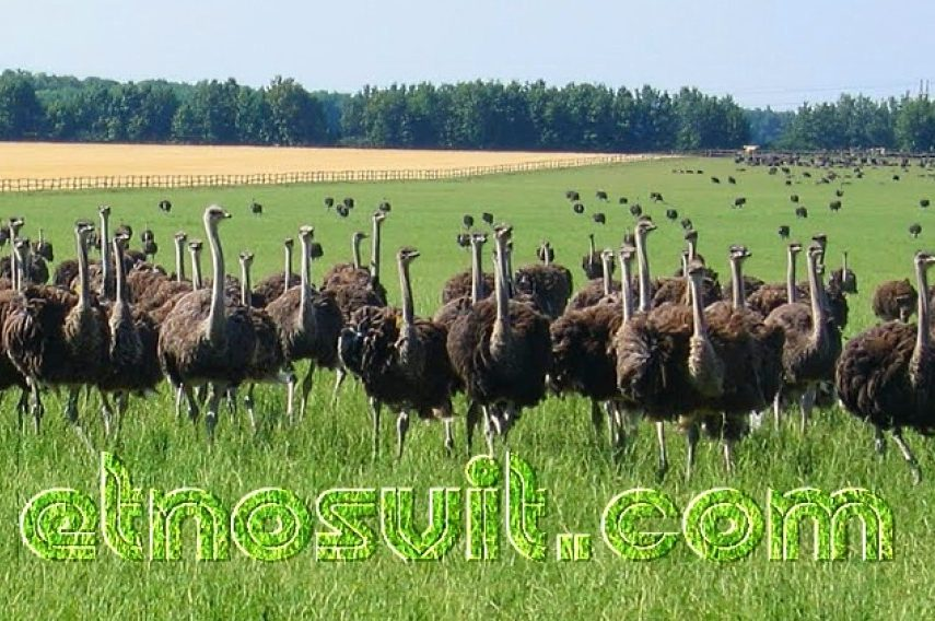 В гості до страусів + Етно комплекс