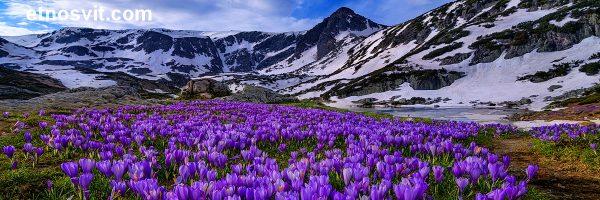 Весенний отдых в Карпатах Долина крокусов
