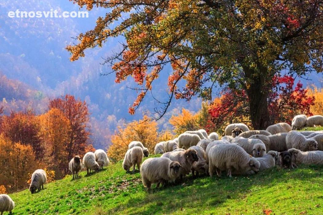 Отдых в Карпатах осенью / Тур-відпустка 6 ДНІВ У ОСІННІХ КАРПАТАХ