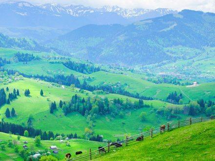 Полонины - Верховина / отдых в Карпатах летом