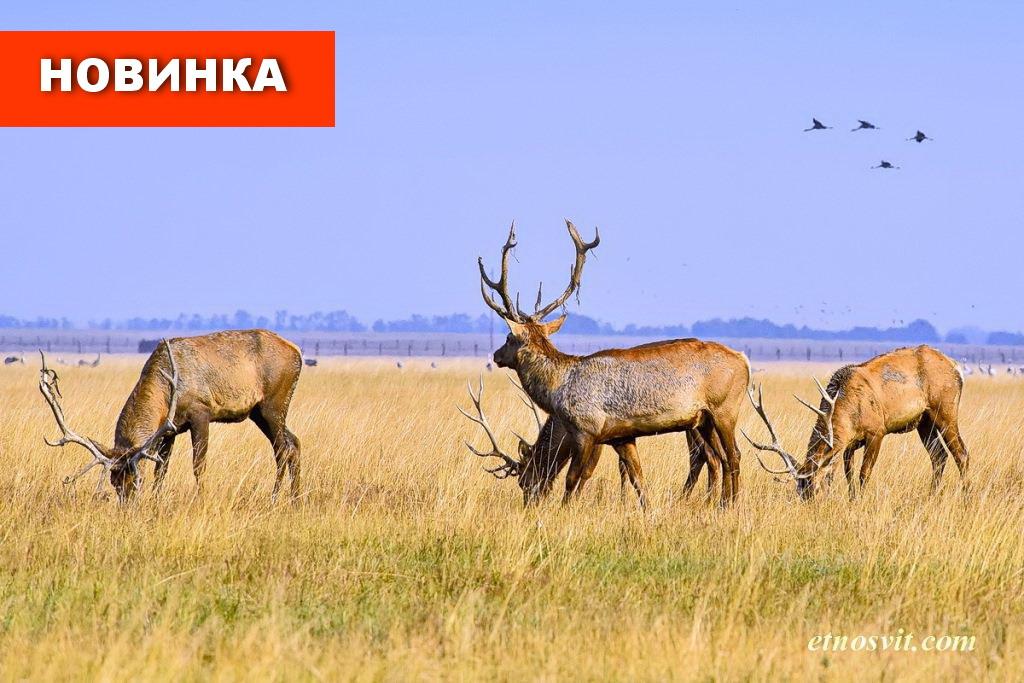Тур в Асканию-Нову из Киева
