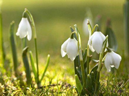 Закарпаття відпочинок весною / первоцвіти
