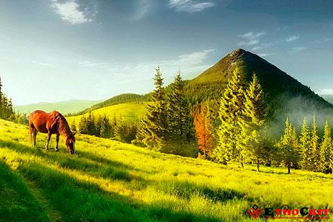 Похід на гору Хомяк / Поход на гору Хомяк