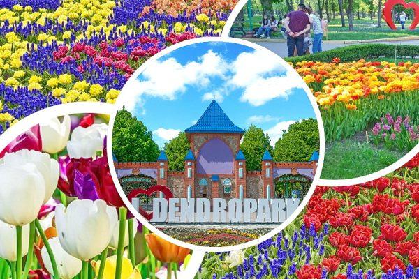 Цветение тюльпанов, Дендропарк в Кропивницком