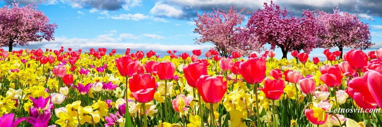 Квіткові тури / Цветочные туры