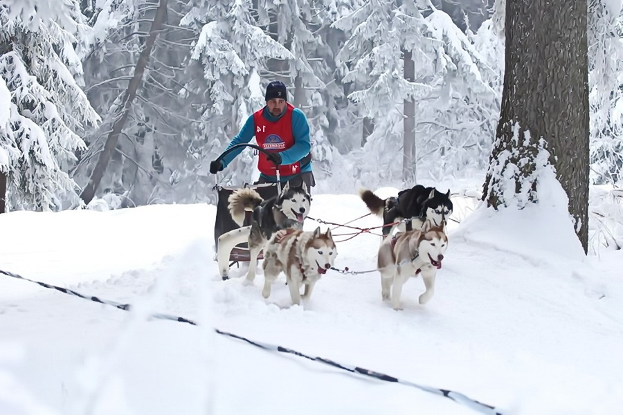 Карпати взимку - прогулянки на упряжках Хаскі
